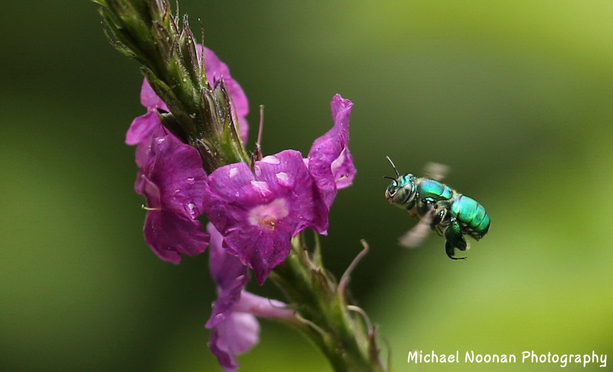 insects_B01Q6157c