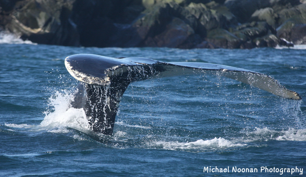 whales_dolphins_1V5Z5342c