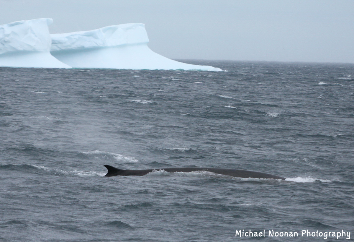 whales_dolphins_1V5Z5659c