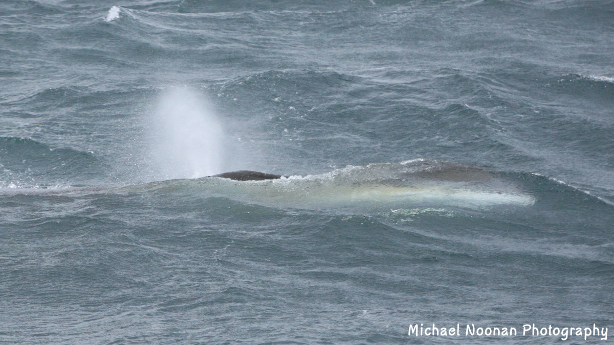 whales_dolphins_1V5Z5683c