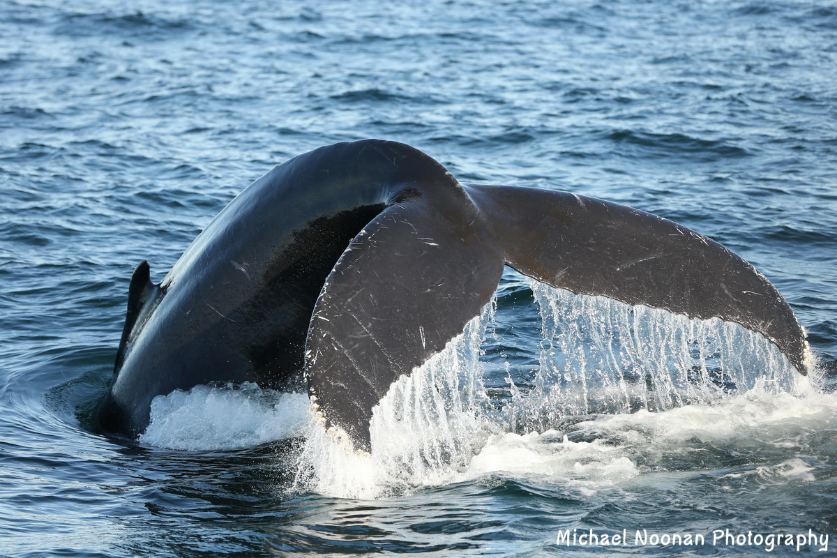 whales_dolphins_B01Q9426