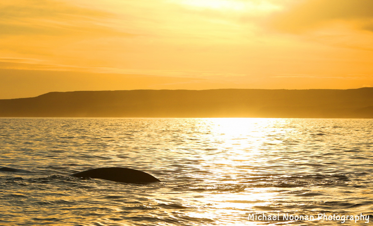 whales_dolphins_B01Q9438cac